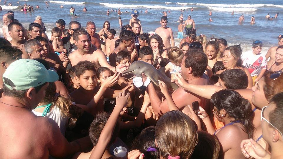 Dolphin dies after people carry it on shore so people can take selfies with it Taken from: https://www.facebook.com/photo.php?fbid=10209159503374847&set=a.10201500166576214.1073741829.1537837065&type=3 Hernan Coria - Dolphin Murder pic