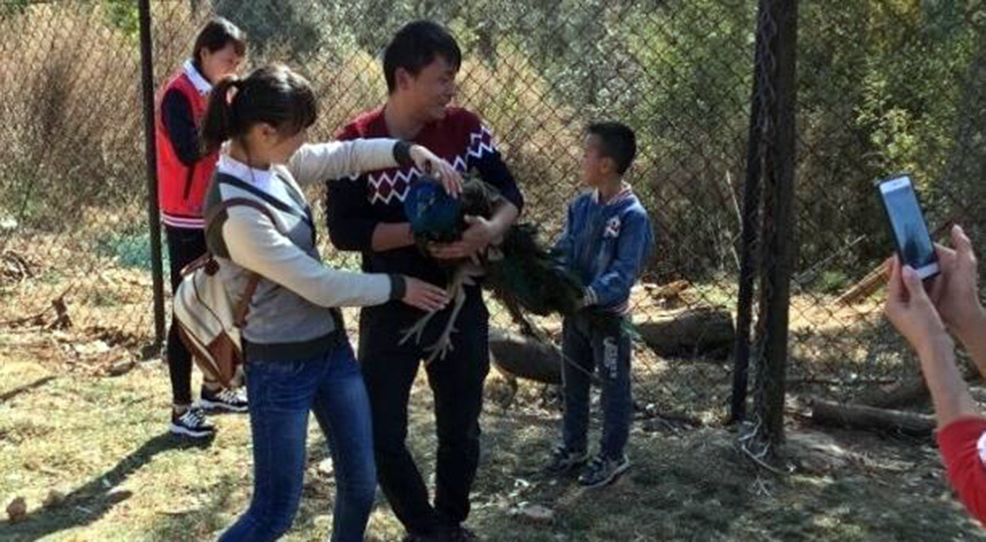 """Pic shows: the scenes in which the tourists plucked the peacocks' feathers. Chinese tourists behaving badly are accused of grabbing peacocks and killing them by plucking out their tail feathers, and then hanging on to them to take selfies. The incident happened in Kunming city, in central China's Yunnan Province which was already hit by controversy over the repeated abuse of local seagulls by tourists. They have been photographed being grabbed for selfies, as well as another incident in which a tourist snapped himself taking shots at them. This time however it is peacocks that have been the subject of tourist abuse at the Yunnan Wild Animal Park. It is home to around 6,800 peacocks with one of the main attractions being allowing tourists to roam among the birds, although managers of the park make it clear that the peacocks are not to be touched. However that didn't stop some tourists over the weekend and in snaps posted online it showed the tourists going a stage further and grabbing hold of the peacocks. After the images emerged the zoo confirmed the deaths of two of its peacocks during the Spring Festival holiday and said a complaint had been made to police. Officers meanwhile confirmed that it appeared the peacocks had died because of the """"violent behavior"""" of tourists that included holding the birds too tightly and pulling out feathers as souvenirs Online users angry at the treatment for the birds demanded similar torture for the tourists. One said: """"I think the woman should have her hairs pulled out one by one, then she might know how it feels."""" (ends) ¿¿¿¿¿¿¿¿¿¿"""
