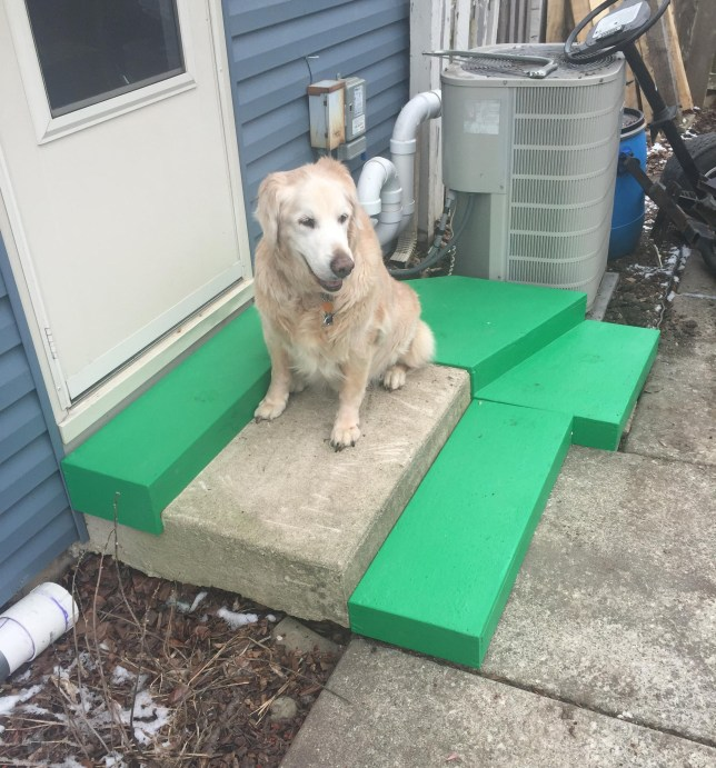 Caring owner builds extra stairs so his elderly dog can get inside Credit: Mirzag/ Reddit