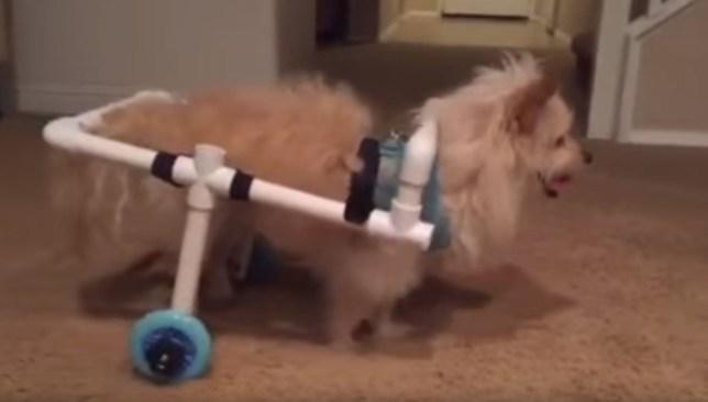 James Stewart Paniagua Makes Homemade Dog Wheelchair After