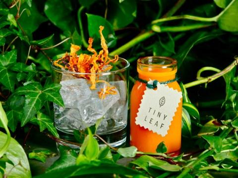 London's first organic, vegetarian, zero-waste restaurant opens
