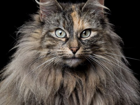 Just some professional portraits of cats who are not in the mood