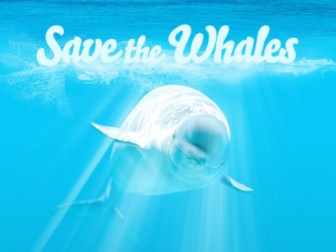 Watch porn; Save Whales