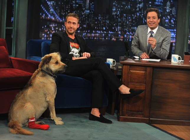 """NEW YORK, NY - JULY 20: Ryan Gosling along with his dog George visits """"Late Night With Jimmy Fallon"""" at Rockefeller Center on July 20, 2011 in New York City. (Photo by Theo Wargo/Getty Images)"""