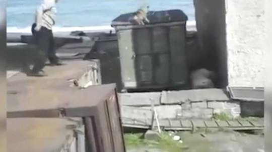 Dog thrown at polar bear