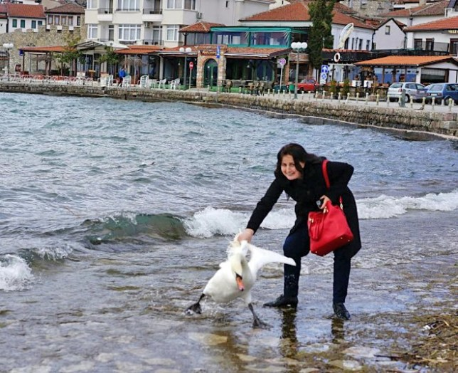 A rare tourist vulgarity in Ohrid: killing a swan to take a picture.