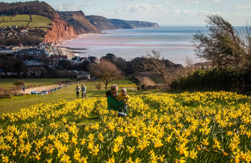 "Woody Sebastian McElhone aged 10 months plays with his mother Fran amongst the daffodils on Park Hill in Sidmouth, Devon.Thousands of daffodils are lighting up a seaside town nine years after a dying millionaire asked them to be planted with his final breath. See swns story SWDAFFS. Former pilot Keith Owen left his £2.3m fortune to the resort of Sidmouth in Devon to create a ""valley of a million bulbs"". His dying wish was fulfilled - and the sweeping swathes of stunning daffodils illuminate the town each spring. In 2007, aged 69, Owen was given just weeks to live from lung cancer and asked the resort, which he regarded as paradise, to use his money to keep the area ""beautiful"". Owen, who made his wealth in investment banking, stated that the capital should remain untouched but each year the estimated £120,000 interest should be spent on schemes to brighten up Sidmouth and the neighbouring villages of Sidford and Sidbury. The UK's oldest civic society, the Sid Vale Association (SVA), launched the project in 2013 to plant more than 400,000 bulbs. Bulbs team leader John Townsend said: ""In the first year, we planted 178,000 bulbs and in 2014 we planted 220,000. ""One million was Keith's amazing dream and we are doing our best to fulfil his last wish."