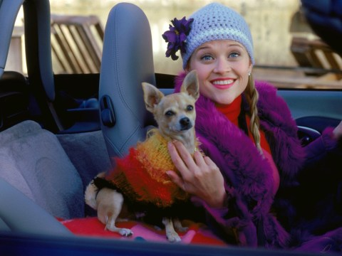Legally Blonde's chihuahua Bruiser Woods – aka Moonie – has died aged 18