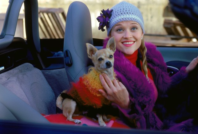 No Merchandising. Editorial Use Only. No Book Cover UsagenMandatory Credit: Photo by Everett/REX/Shutterstock (414313t)nREESE WITHERSPOON AND BRUISER IN 'LEGALLY BLONDE' - 2001nTHE AGE OF INNOCENCE, film stillnn