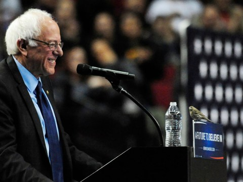 #BirdieSanders: Bernie Sanders' speech was just interrupted by a small bird