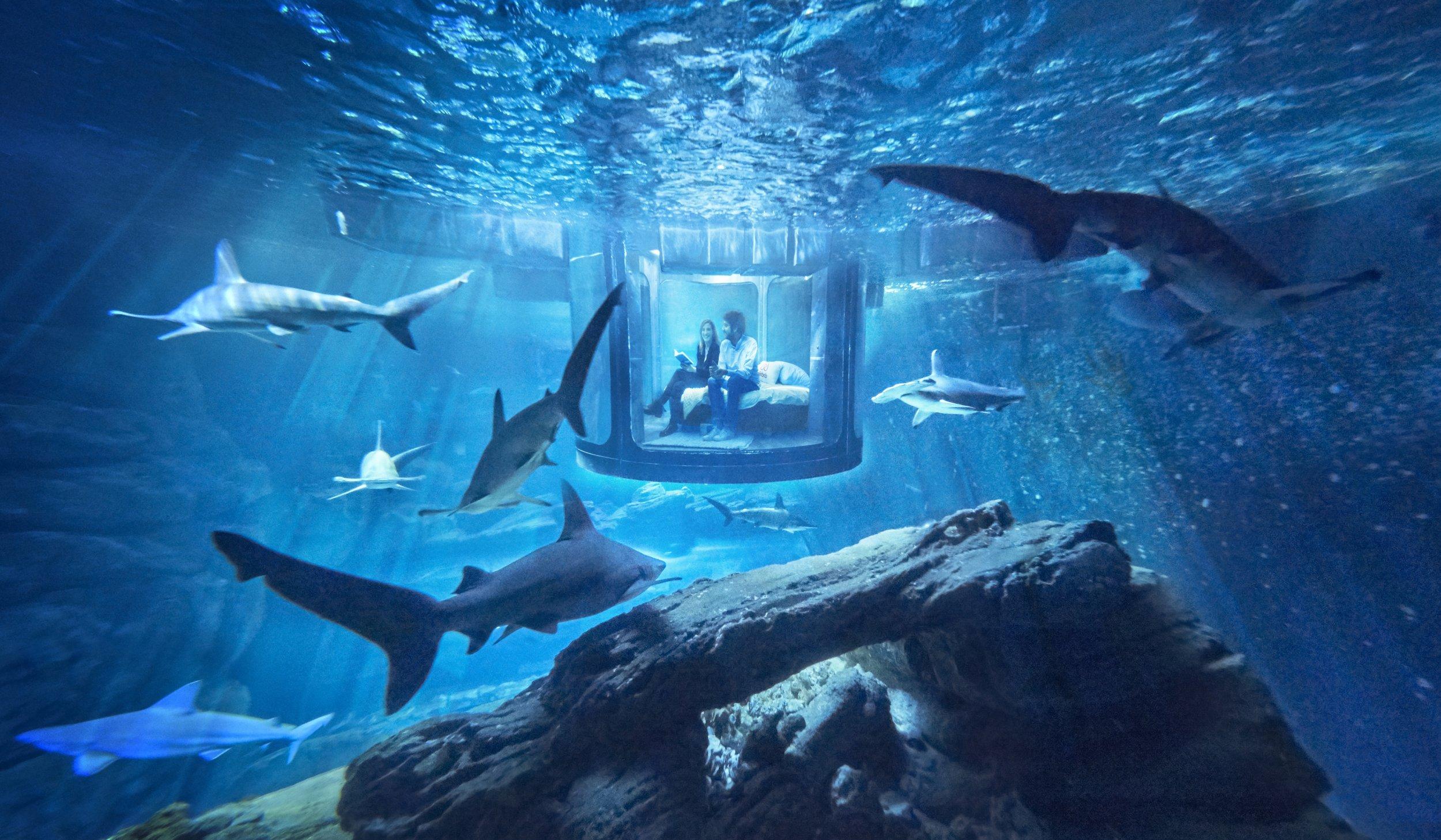 Aquarium de Paris hosts the first ever underwater bedroom on Airbnb Must link: https://www.airbnb.co.uk/night-at/shark-aquarium