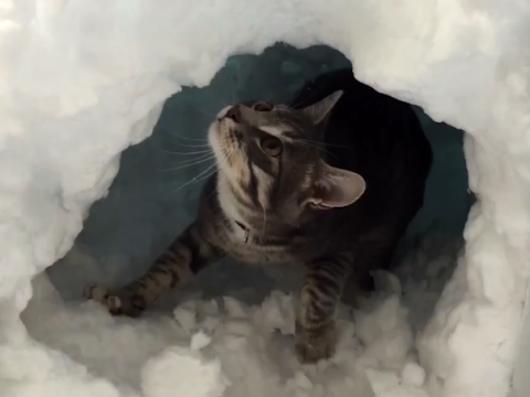 Cute video shows clever cat building a snow igloo