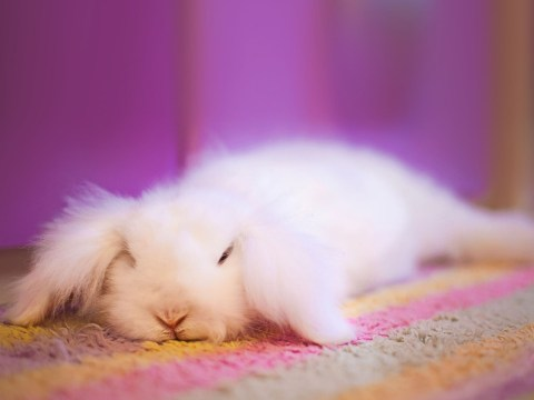 Why do we say 'white rabbits' and 'pinch punch' for the first day of the month?