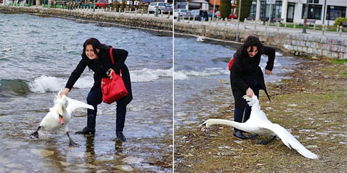 Woman 'kills swan by taking selfie with it'