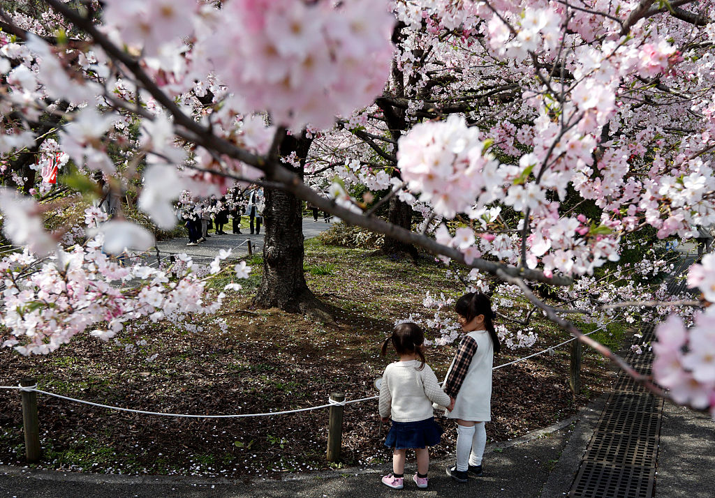 TOKYO, JAPAN - MARCH 31: Girls stand in front of a cherry tree in blossom on March 31, 2016 in Tokyo, Japan. (Photo by Tomohiro Ohsumi/Getty Images)