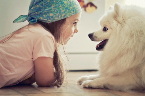 7 signs that your dog really loves you, say pet behaviour