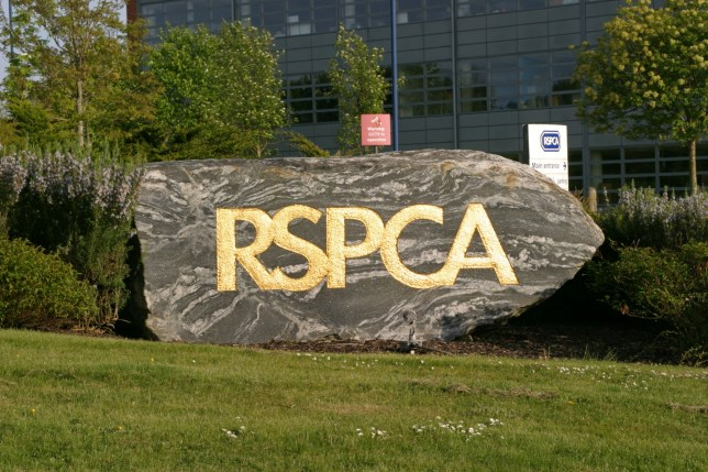 BAXPKK RSPCA Headquarters UK. Image shot 04/2009. Exact date unknown.
