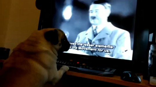 """Markus Meechan's video of his girlfriend's dog Buddha who has been taught to react to Nazi commands. See Centre Press story CPNAZI; Jewish leaders have condemned a man who has released a video in which he teaches his girlfriend's dog to Sieg Heil and react to the phrase """"Gas the Jews"""". The shocking clip, recorded by former security guard Markus Meechan, has attracted almost one million views on Youtube. And the video, which Jewish leaders say """"beggars belief"""", has been shared widely on social media after it was released just over a week ago. The video shows Mr Meechan, who goes by the online moniker 'Count Dankula', teaching a pug-breed dog named Buddha to respond to the revolting anti-semitic phrase about gas chambers and to raise its paw in an imitation Nazi salute when it hears the words Sieg Heil."""