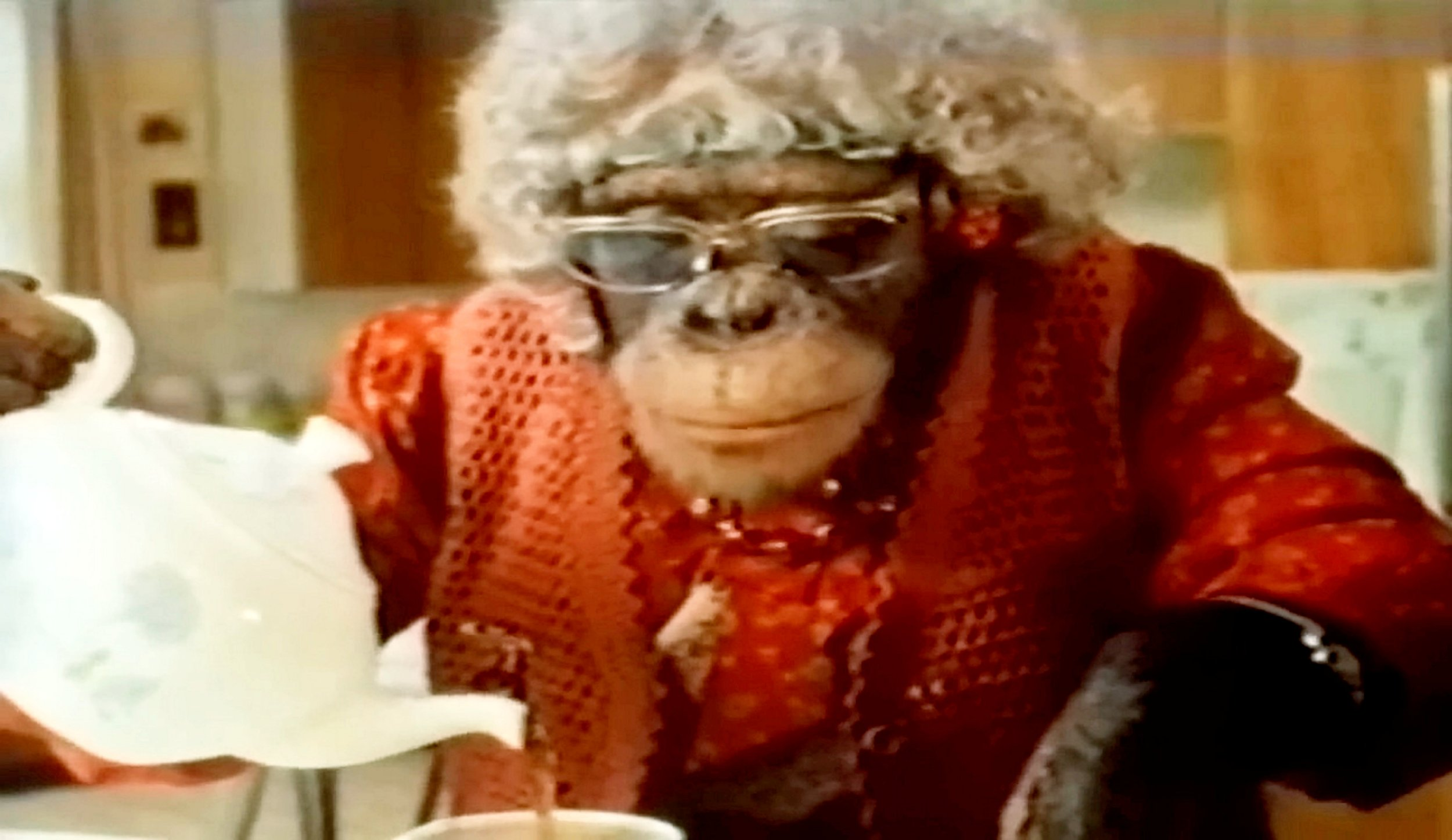 "Choppers performing as Ada in a PG Tips advert in the 1980's. The last of the original PG Tips chimpanzees has died at Twycross Zoo. See NTI story NTICHIMP. Choppers, who was 48, played Ada in the memorable adverts which were broadcast on TV from the 1950s. The zoo said the ""much-loved"" ape had signs of heart and liver failure and the decision to put her to sleep was made on Wednesday. In 2014, the zoo told the BBC the use of apes on television had been wrong and Choppers was ""mixed up"" as a result. Chimps like Choppers were trained by Twycross, in Leicestershire. They were dressed up in clothes and lip-synced with the voices of actors such as Peter Sellers and Bob Monkhouse. They also appeared in children's shows Tiswas and Blue Peter and their messy tea parties were a big hit with the public. After about 30 years, the zoo ended its agreement for its apes to be used in advertising but chimpanzees from abroad still appeared in tea adverts until 2003."