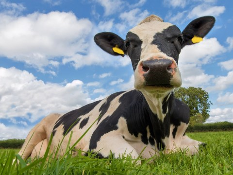 It's impossible to actually be a vegetarian, expert claims