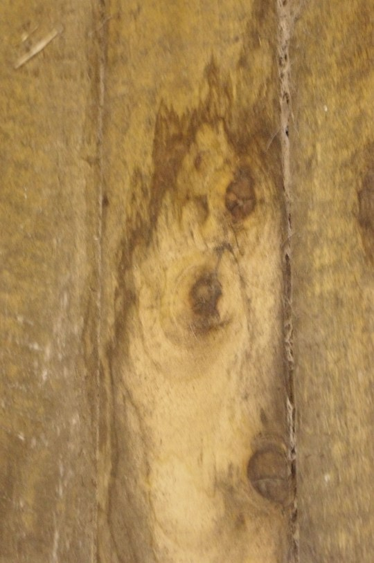 A Devon woman had to rush home to check her dog was OK after seeing his face mysteriously appear in a stain on a stable wall.