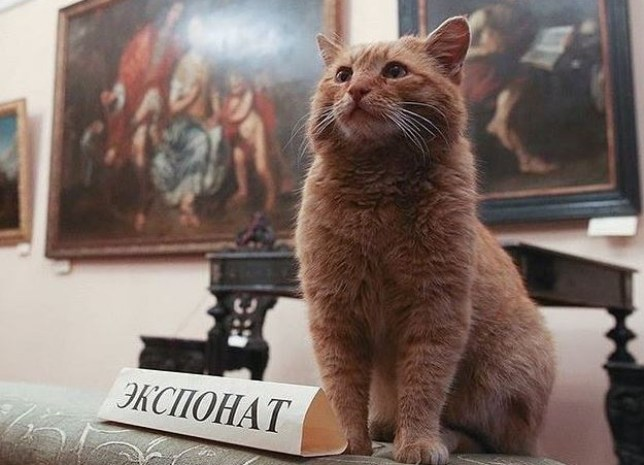 This museum's prank went wrong and now they have a cat employee Credit: Serpukhov Historical and Art Museum
