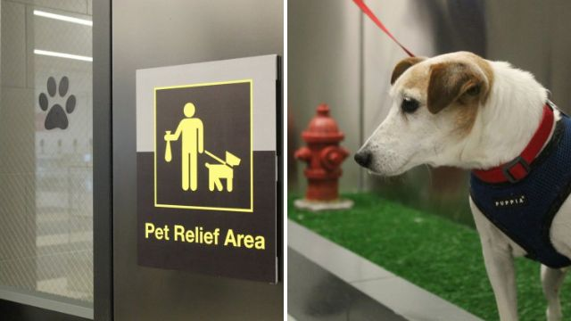 Your pet can now poop like a civilized human in JFK's Terminal 4