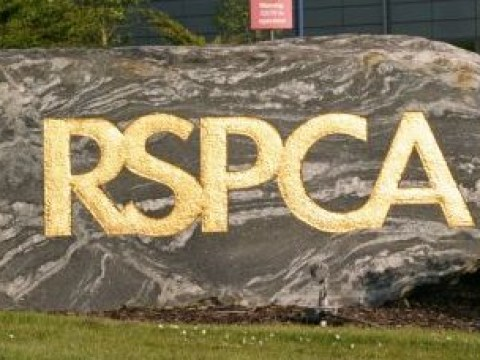 Should RSPCA be stopped from prosecuting animal cruelty cases?