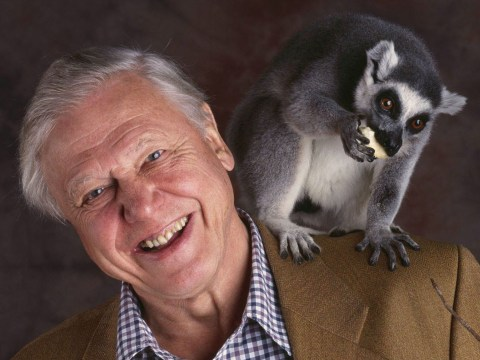 Sir David Attenborough at 90: Here's a throwback to the TV legend at the start of his career