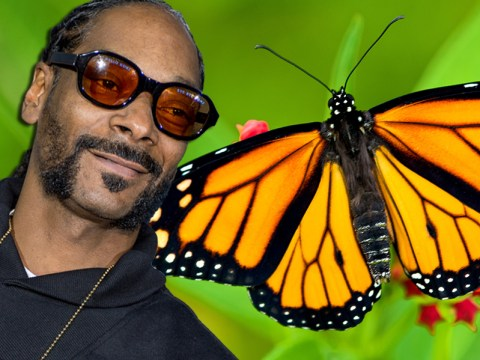 Snoop Dogg wants to come back as a butterfly in the next life
