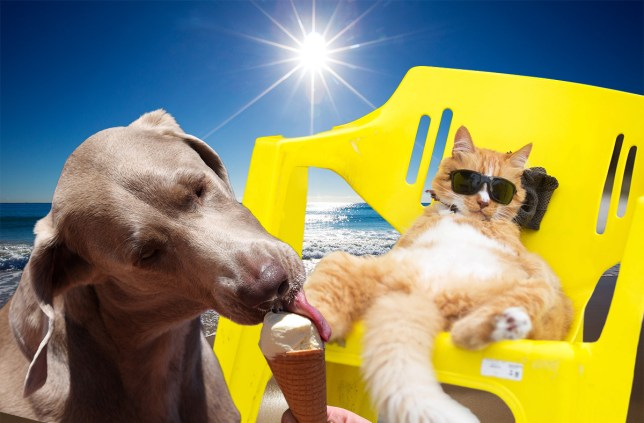 EHK5RY Beijing, Brazil. 14th Mar, 2015. A cat with sunglasses enjoys the sunshine in a chair near the Sao Conrado beach in Rio de Janeiro, Brazil, March 14, 2015. © Xu Zijian/Xinhua/Alamy Live News