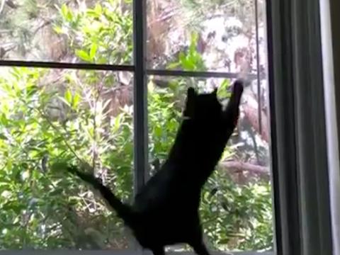 Cat tries to catch bird, headbutts window