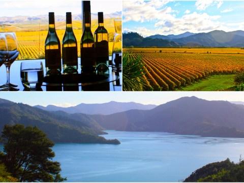 Wine tasting in New Zealand's stunning Marlborough region will do nothing for your drinking Hobbit