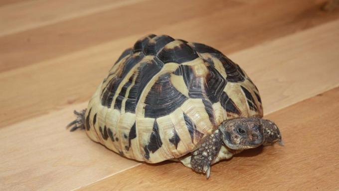 Police raid flat looking for stolen tortoise, find massive drugs haul
