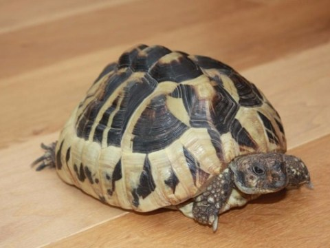 Police raid flat looking for stolen tortoise, find massive drugs haul