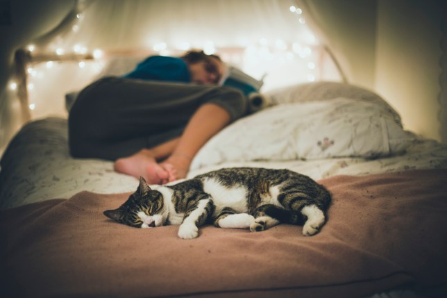 cat sleeping on a bed and a girl reading