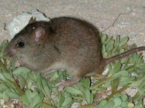 Humans have killed off the first mammal due to climate change