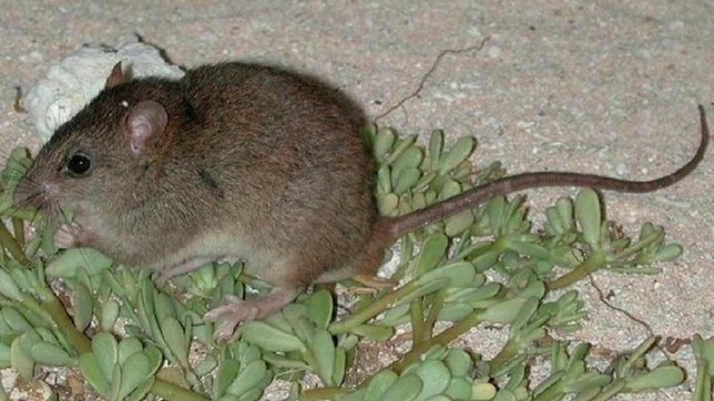 The first mammal has gone extinct due to climate change