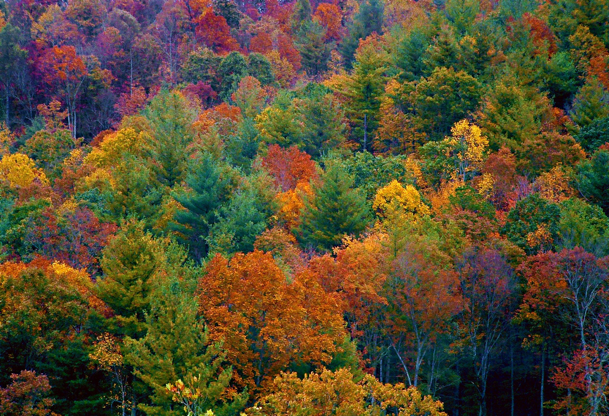 Blue Ridge Parkway Fall Wallpaper When Does Autumn Start In 2017 Autumn Equinox Will Hail