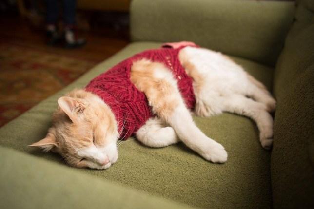 cat bar cat wearing jumper