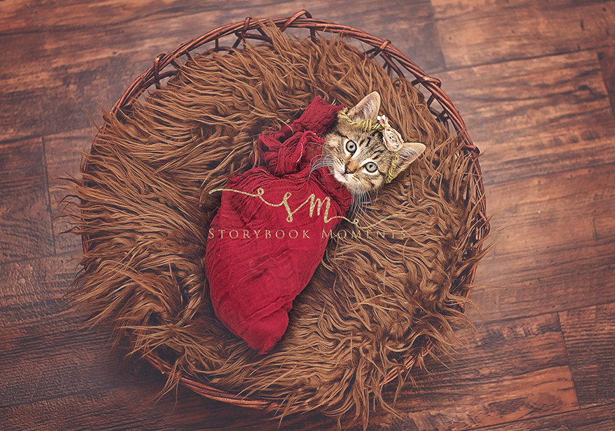 Newborn kitten photoshoot Picture: Cassie Borcherding of Storybook Moments Photography
