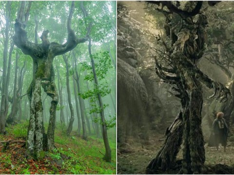 Treebeard from The Lord Of The Rings is living in a Bulgarian forest