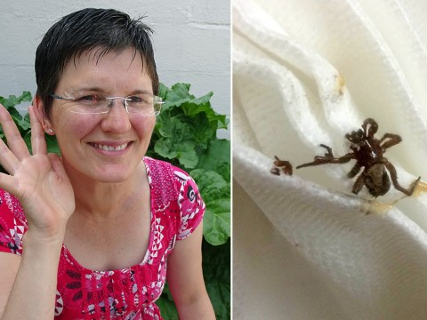 Woman has live spider pulled from ear and it's sure to be your new worst nightmare