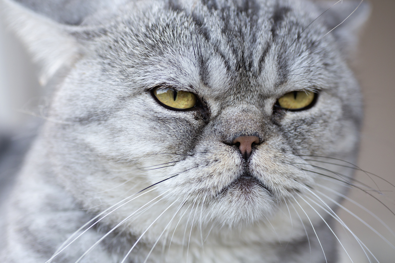 You love your cat unconditionally. The cat is still undecided (Picture: Getty)