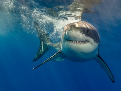 Hold the phone, there's a shark shield that actually works