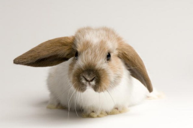 Avoid deadly fly strike in your rabbit with this one life-saving tip