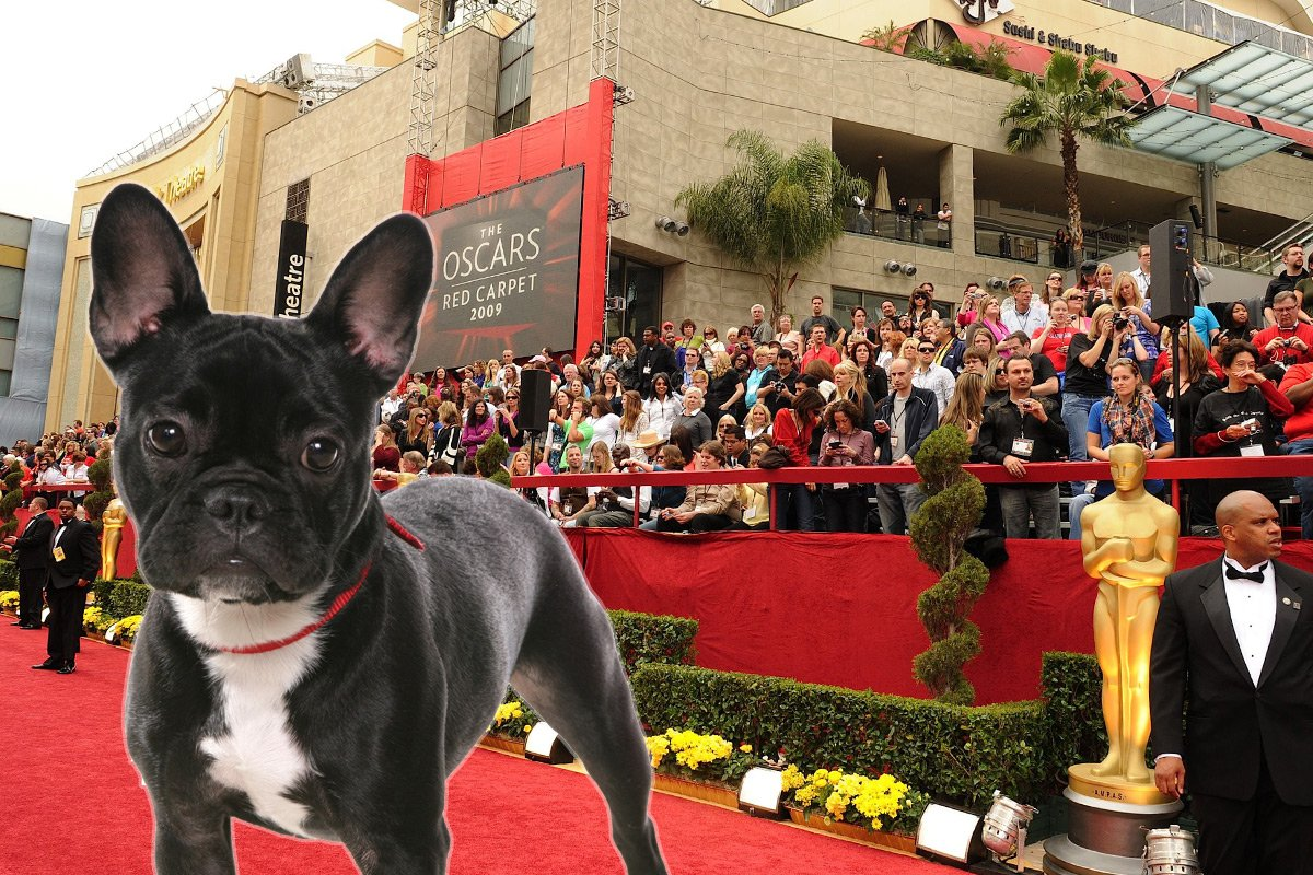 Dog at the oscars credit rex oscars-dog-rex.jpg
