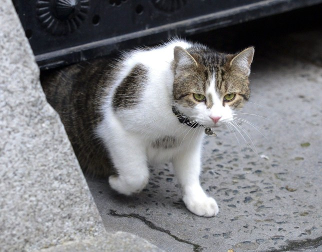 Mandatory Credit: Photo by Steve Back/REX/Shutterstock (5494572f)nLarry the No10 cat out in Downing StreetnDowning Street, London, Britain - 14 Dec 2015nn
