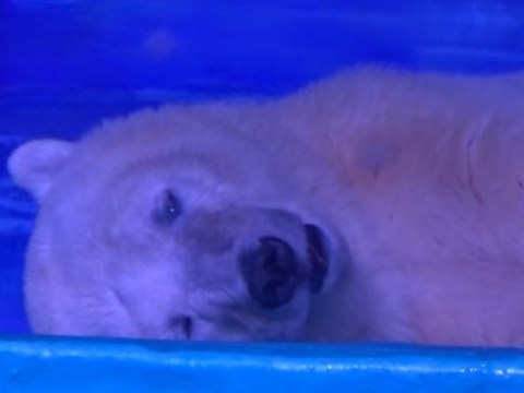 Shopping centre traps polar bear just so shoppers can get a selfie with it
