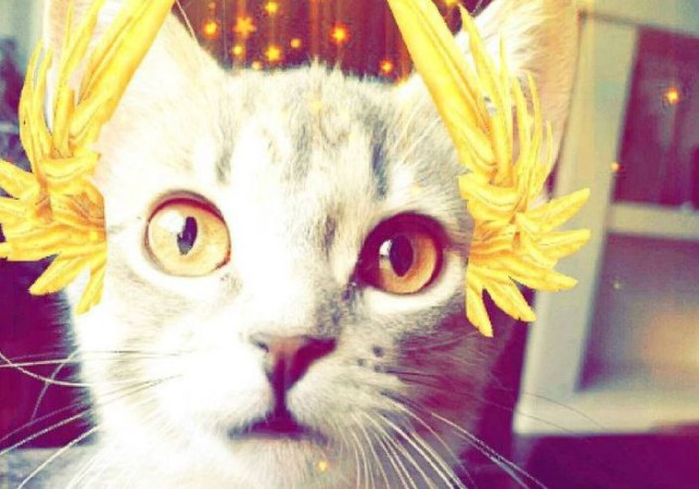 cats with snapchat filters